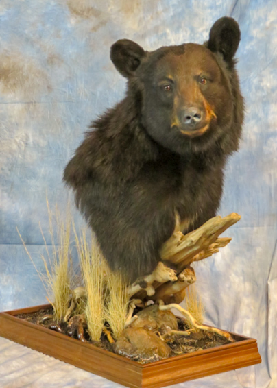 Black Bear taxidermy on a branch