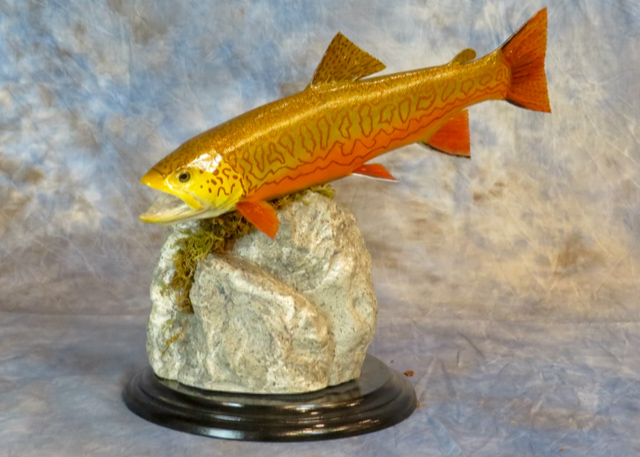 Tiger trout taxidermy fish