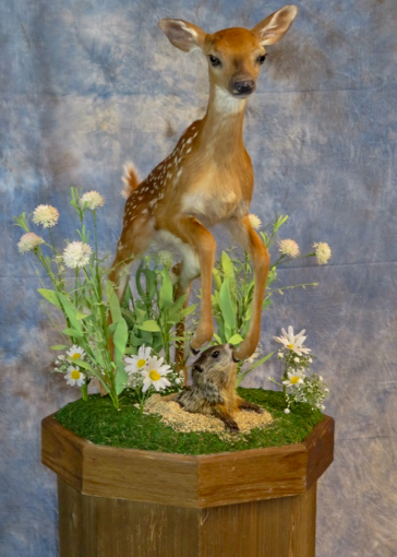Fawn taxidermy on green grass with flowers