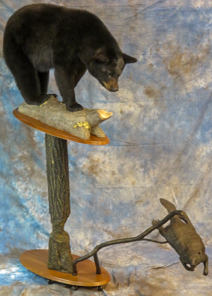 Black bear taxidermy looking at a swimming beaver