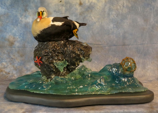 King eider duck taxidermy sitting on artificial water