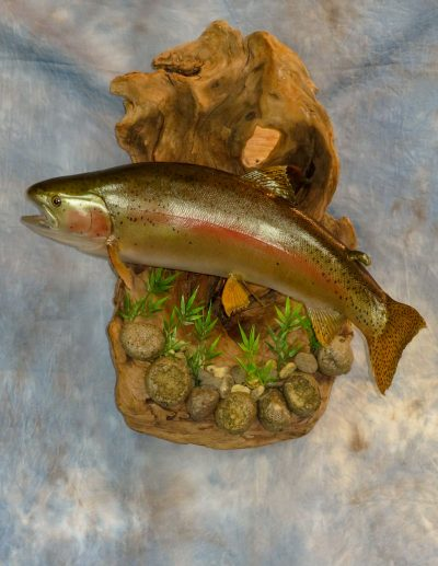 Salmon taxidermy
