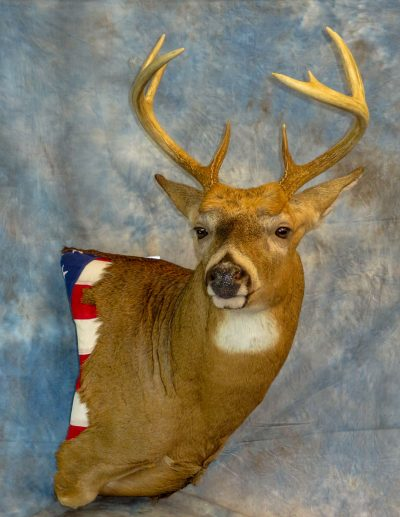 Whitetail deer with American flag taxidermy